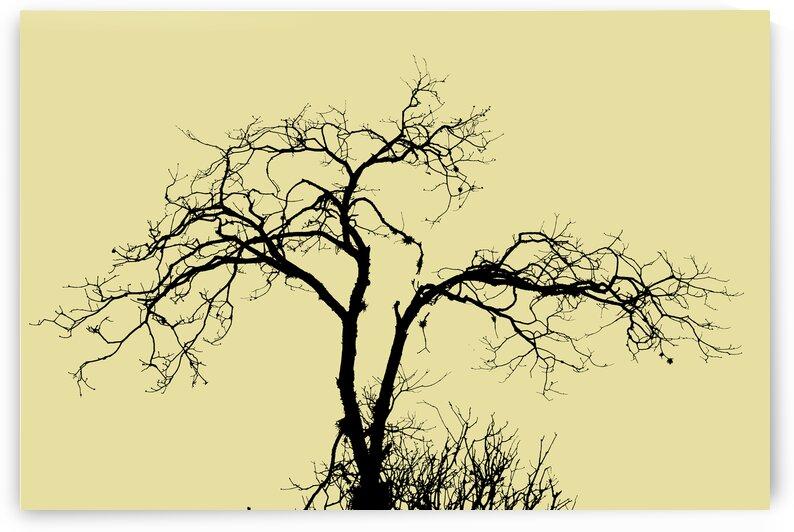 Nature - XXVIII by Carlos Wood