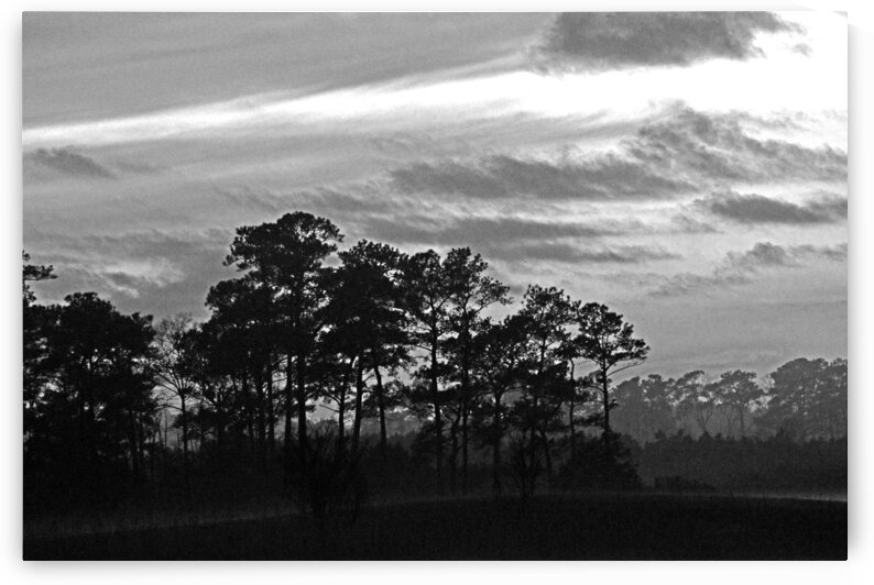 Late Sunset Trees in the Mist in Black and White by Ocean City Art Gallery