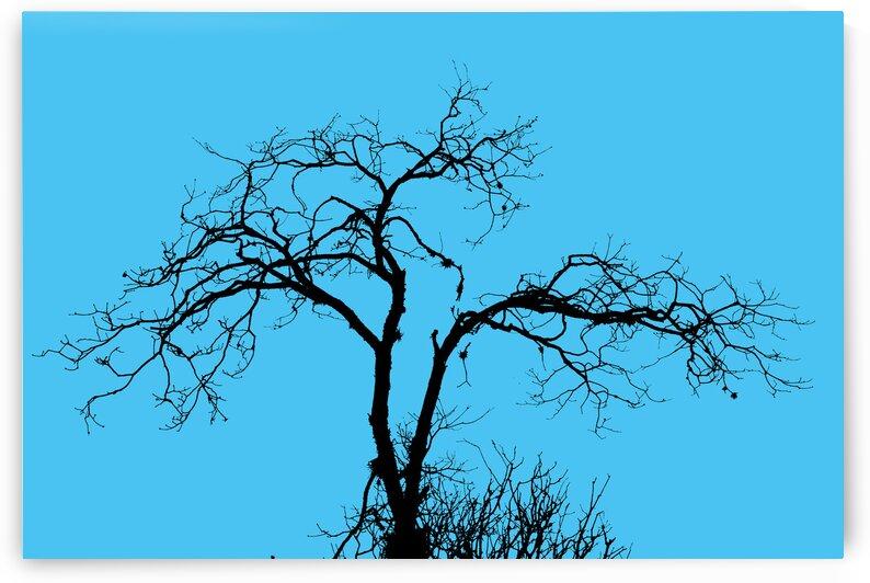nature - XXXIII by Carlos Wood