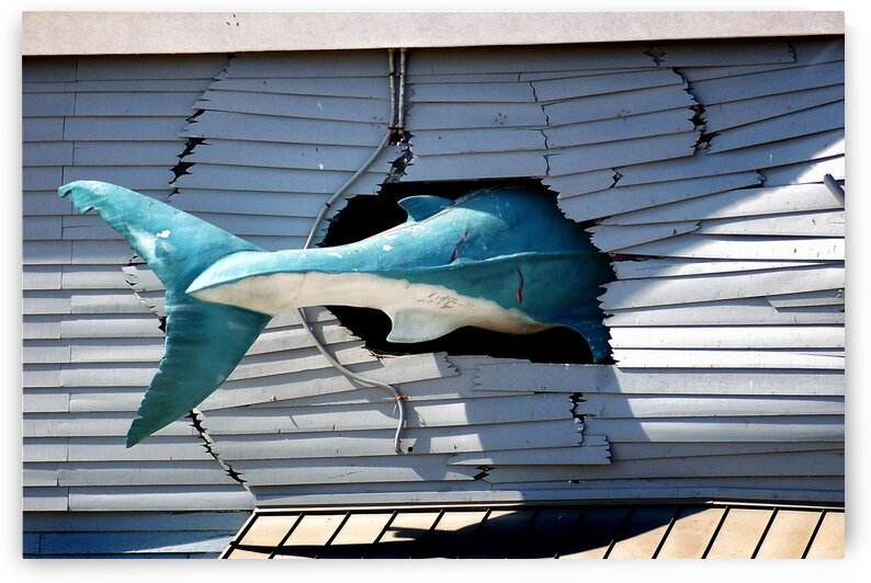 shark tail hole in the wall 6374 by Ocean City Art Gallery