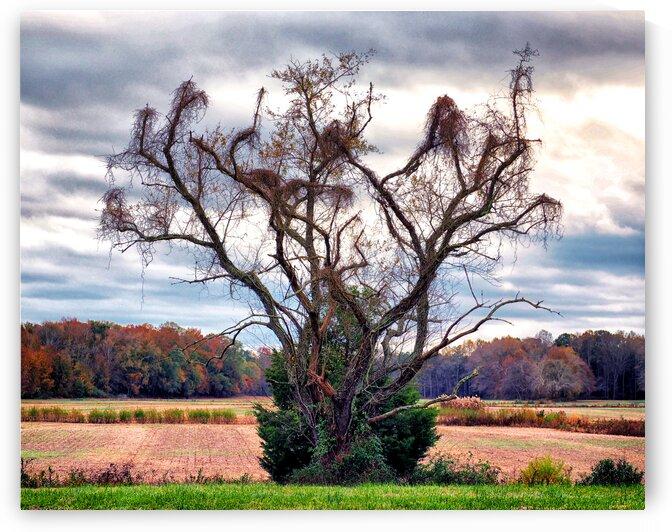 Magic Tree in Roxana Delaware by Ocean City Art Gallery