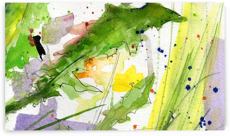 Dandilions Ink and Watercolor  by Ginette Fine Art