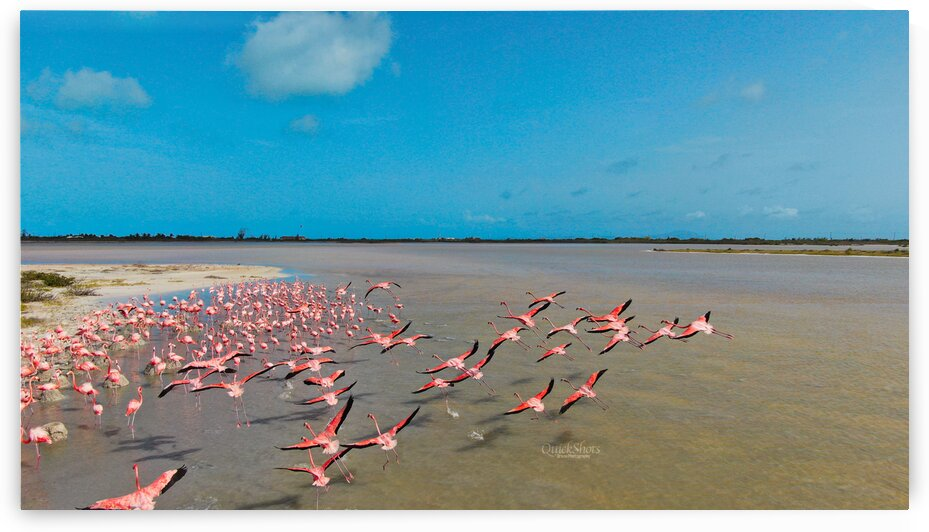 Flamingos over on Anegada by QUICKSHOTS