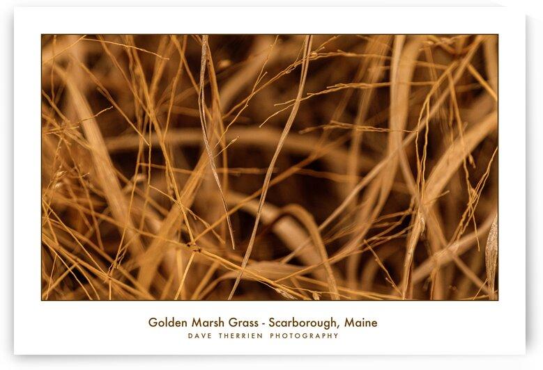 Golden Marsh Grass by Dave Therrien