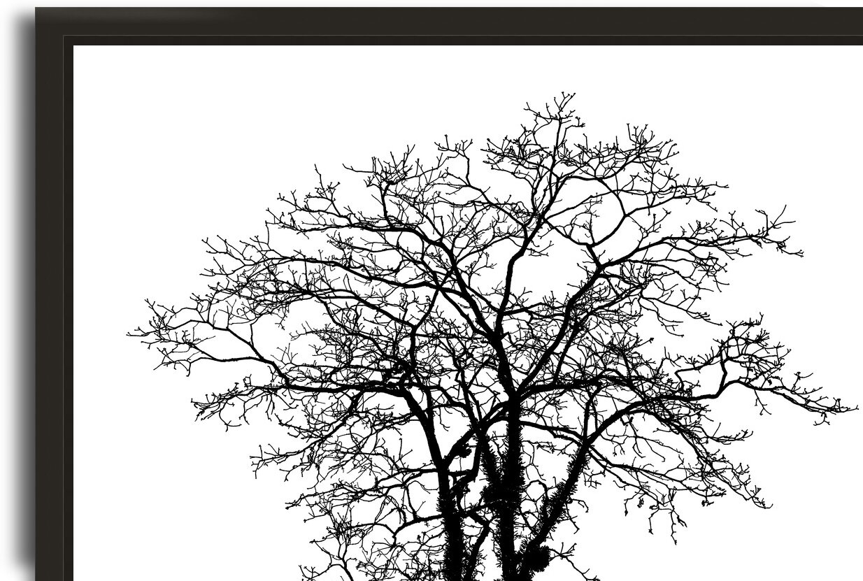 Nature - XXXVIII by Carlos Wood