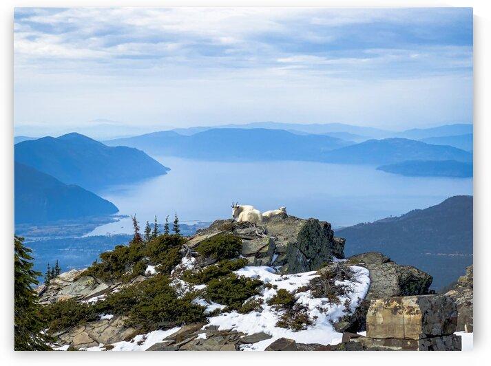 Scotchmans Peak Goats by go explore 7b