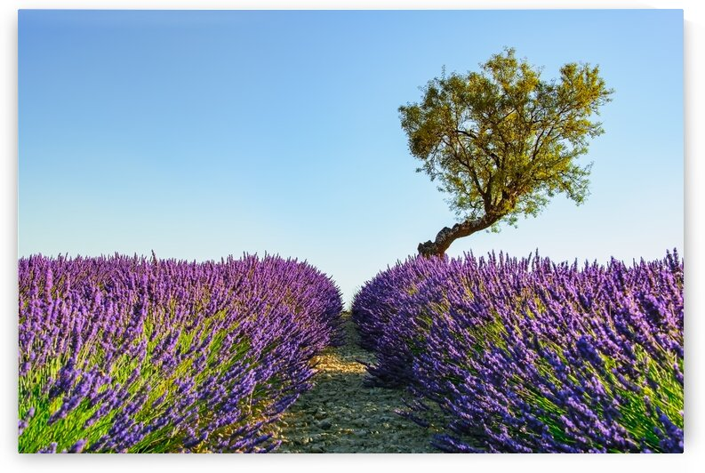 Provence by Manjik Pictures