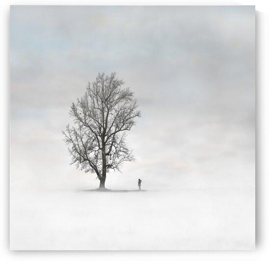 A Lone Tree by Jay Lamm