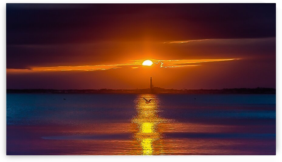 Provincetown Seagull Sunset by vincenzo
