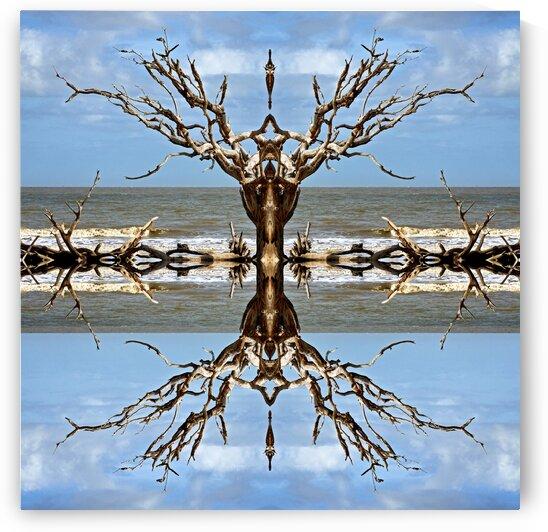 Desert Reflections Aruba by Bill Swartwout Photography
