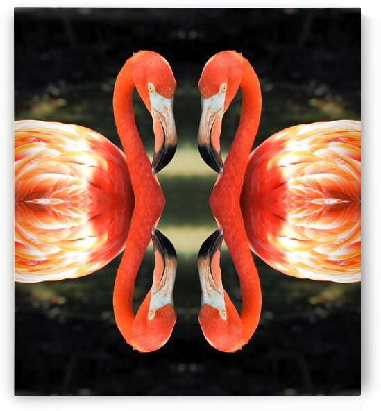 flamingo reflections digital abstract by Bill Swartwout Photography