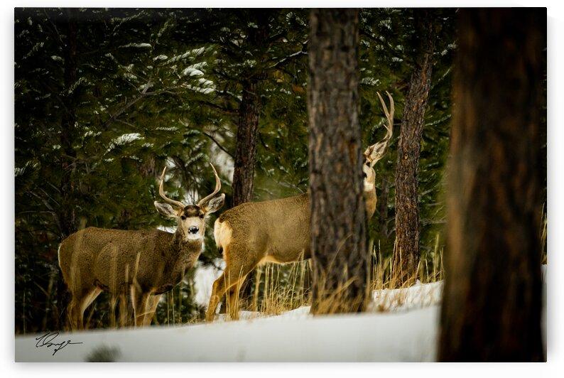 DSC0374 by Wild Sage Photography