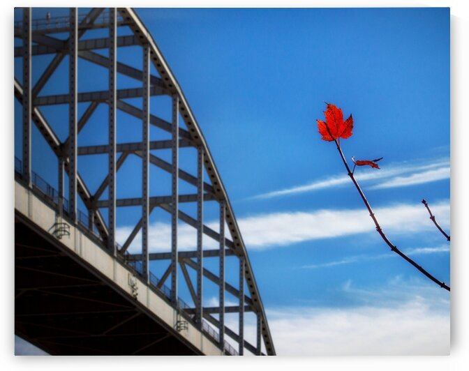 st georges bridge one leaf 3172 by Bill Swartwout Photography