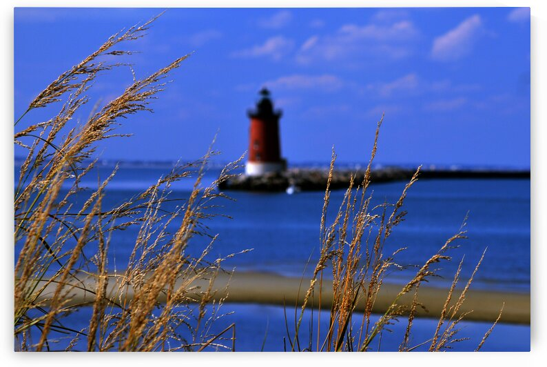 henlopen light w grasses 9585 by Bill Swartwout Photography