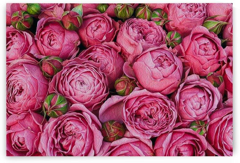 Pink roses with buds. by Ievgeniia Bidiuk