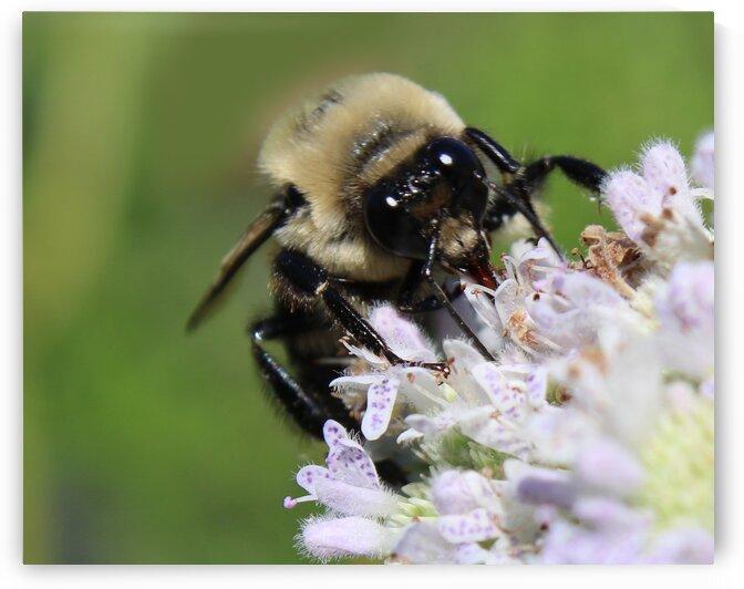 Giant Bee by Toni Ivanov Photography