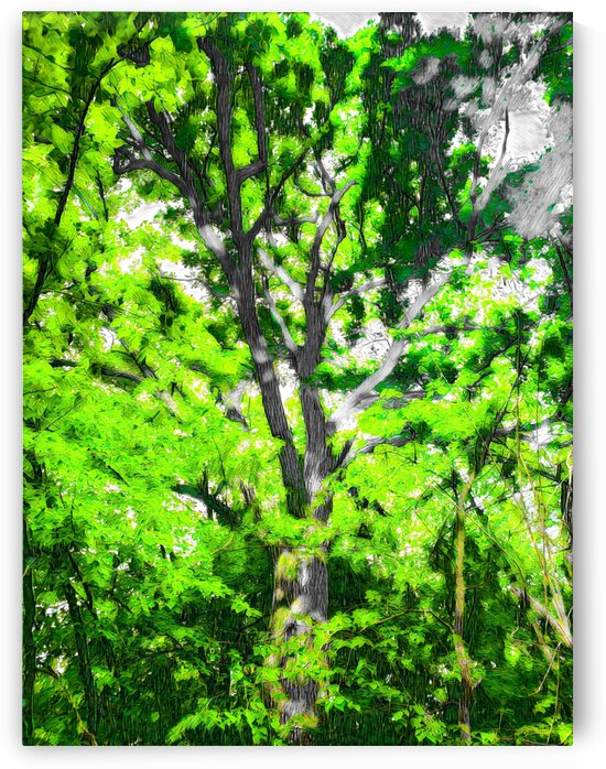 BRANCHES OF LIFE-Abstract-Dublin Ohio by Robert David Concienne