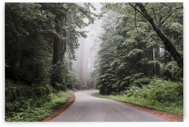 Redwood National and State Park on U.S. 101 in Northern California by 7ob