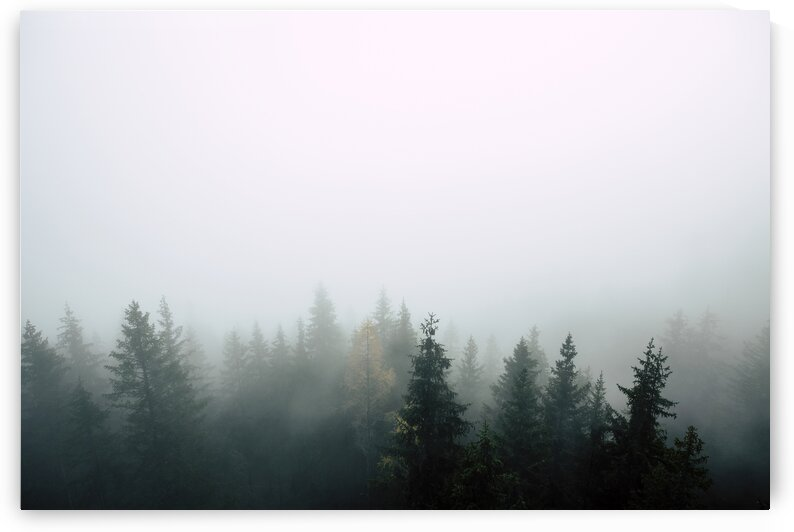 Woodland Covered in Fog by 7ob