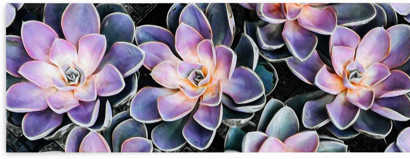 Background from small succulents.  by Ievgeniia Bidiuk