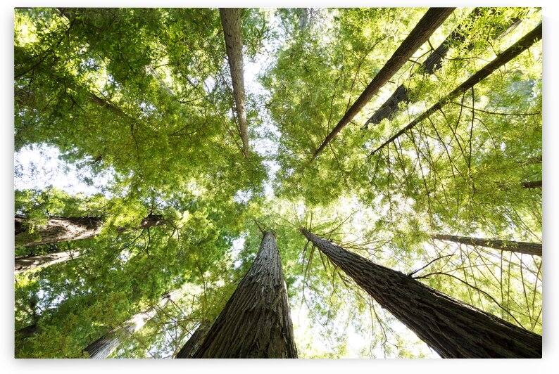 The Redwood National And State Parks by 7ob