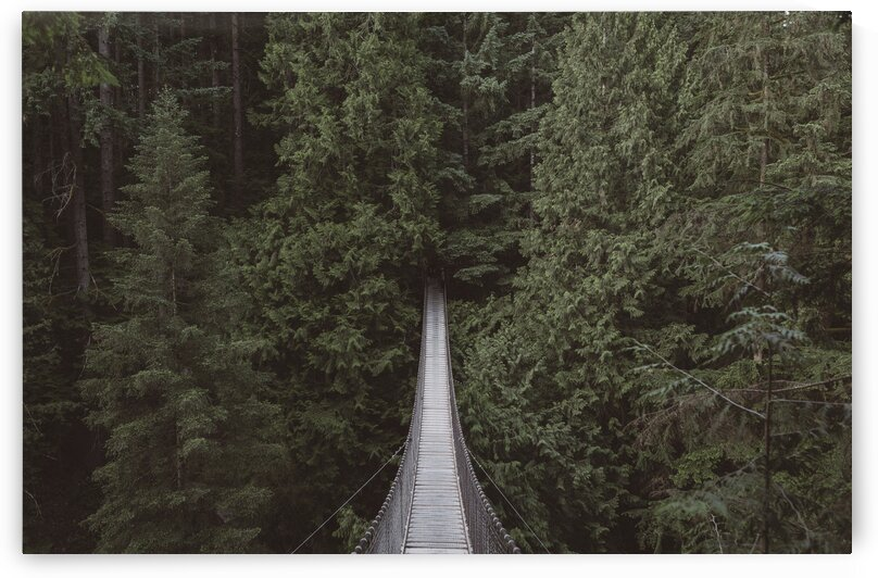 View Of Hanging Bridge Over A Forest by 7ob