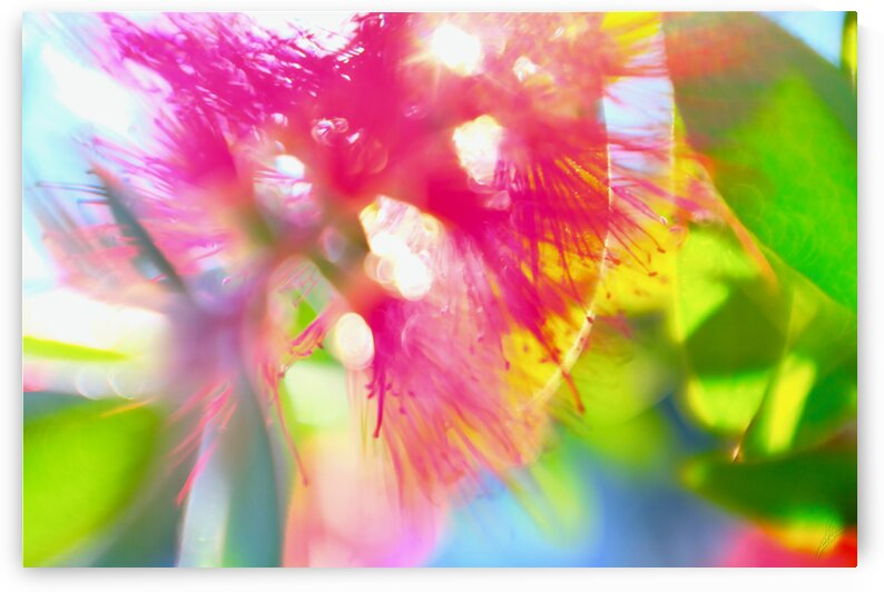 Crystalloid by Drew Hurckman