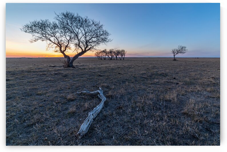Pasture Land by Michael Squier