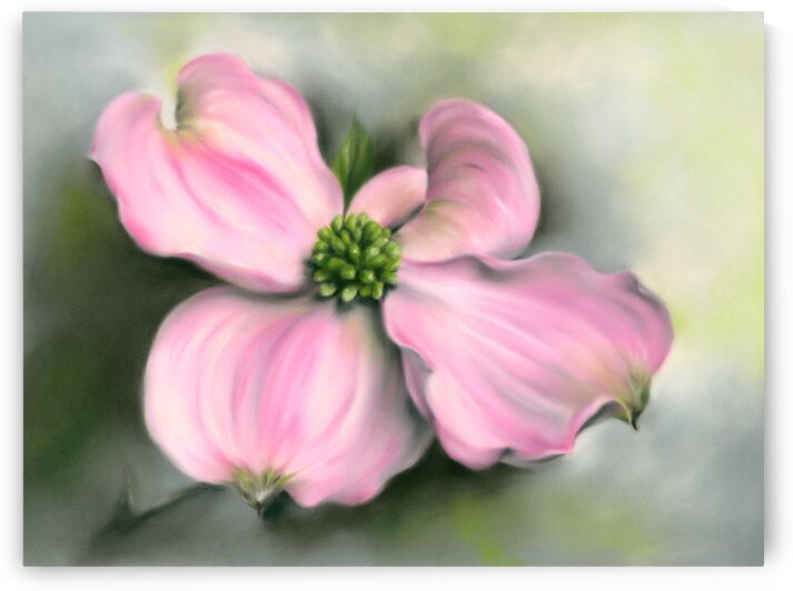 Pink Dogwood in Spring by MM Anderson
