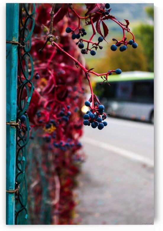 Red Beautiful Vine Plant by Jerrys Studio