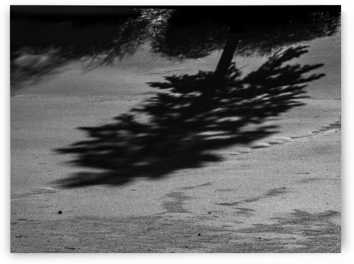Nature life   5  by Jean-Francois Dupuis