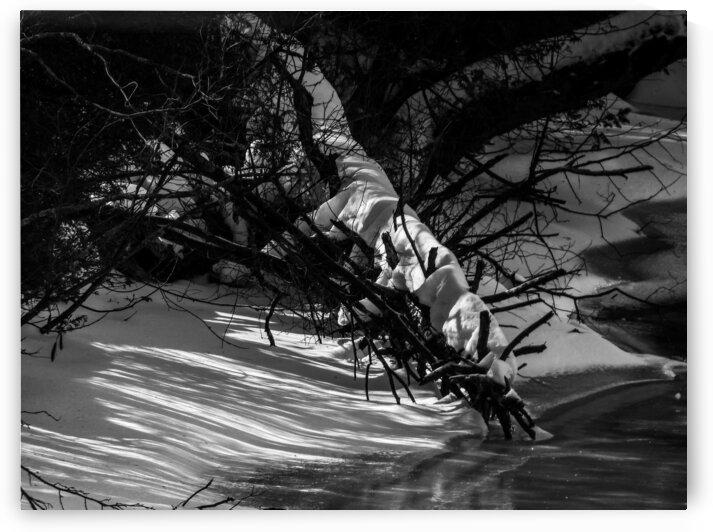 Nature life   22  by Jean-Francois Dupuis