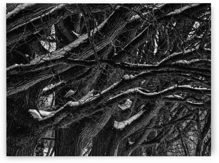 Nature life   6  by Jean-Francois Dupuis
