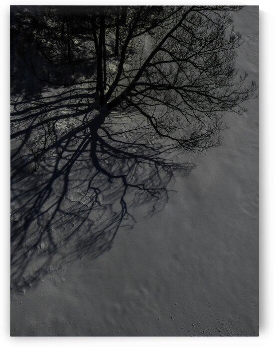 Nature life   10  by Jean-Francois Dupuis