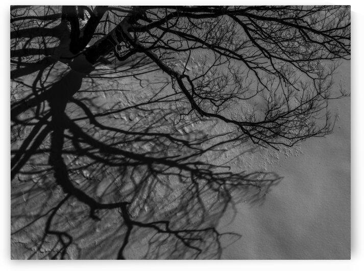 Nature life   9  by Jean-Francois Dupuis