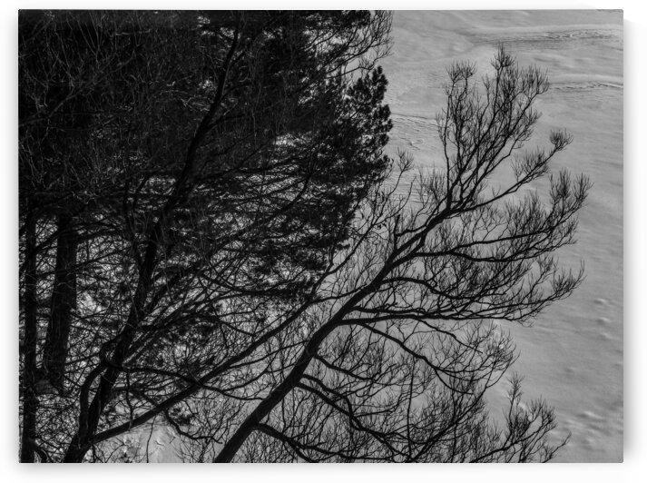 Nature life   13  by Jean-Francois Dupuis