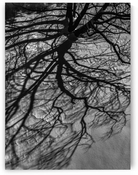 Nature life   7  by Jean-Francois Dupuis
