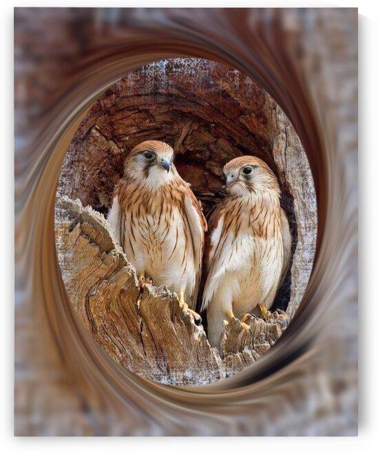 Birds of Prey by Cris Rodrigues