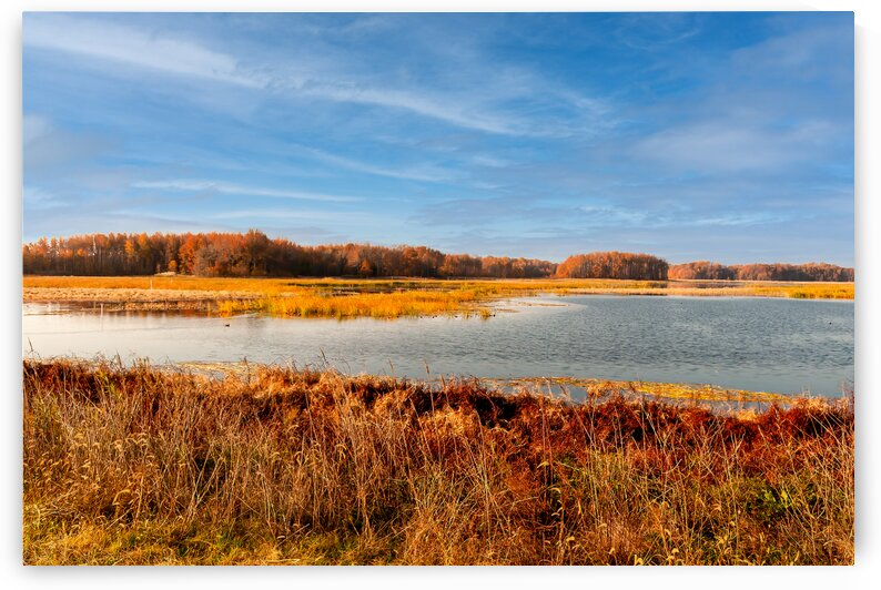 Scenic View at Bombay Hook. by Eric Franks Photography
