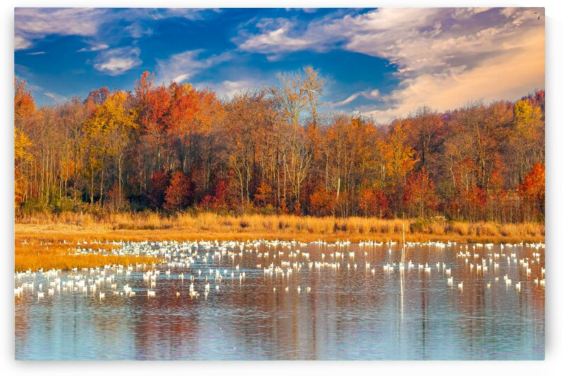 Migrating Waterfowl by Eric Franks Photography