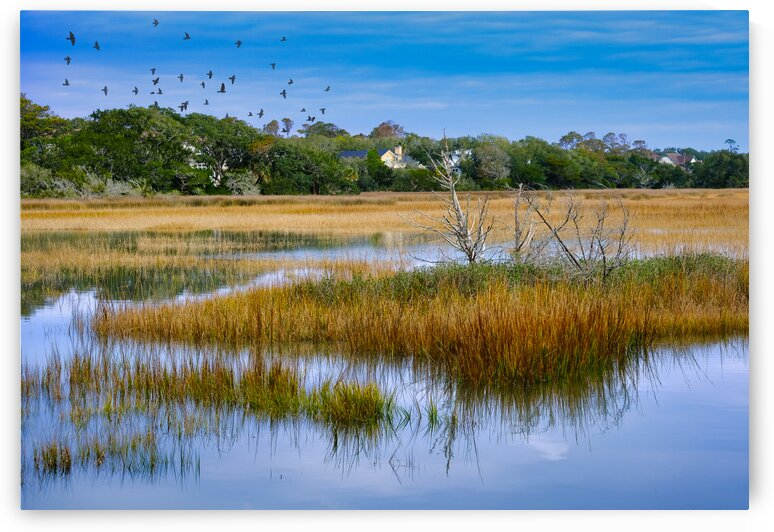 Salt Water Marsh at High Tide by Darryl Brooks