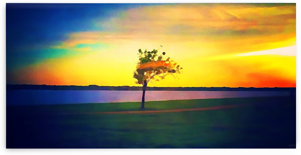 lone tree by Pierce Anderson