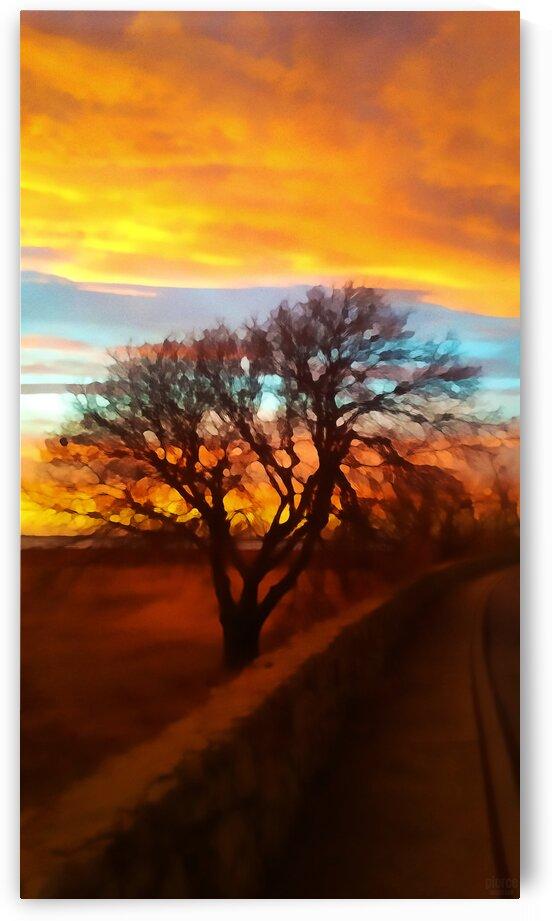 winter delight by Pierce Anderson