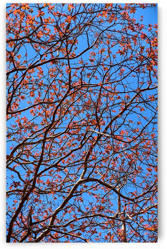 The red leaves in the early spring by Krit of Studio OMG