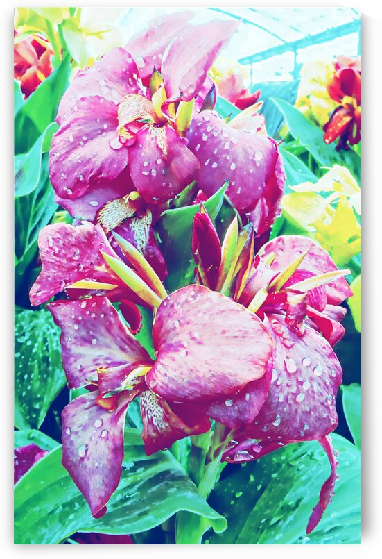 Canna Lily with Water Drops by Dorothy Berry-Lound