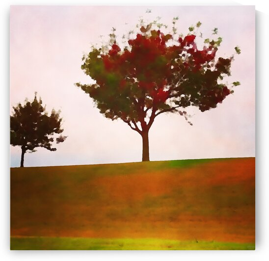 fall tree by Pierce Anderson