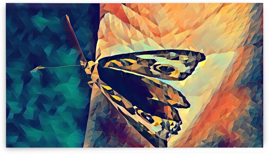 butterfly art by Pierce Anderson