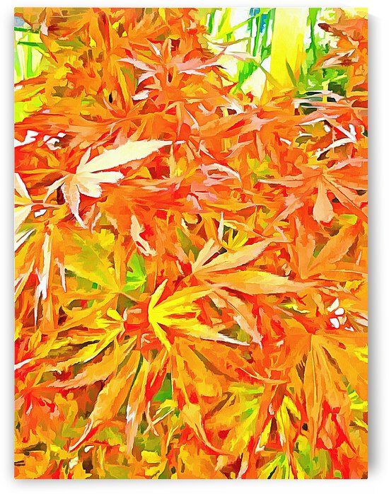 Acer Pop Art Style by Dorothy Berry-Lound