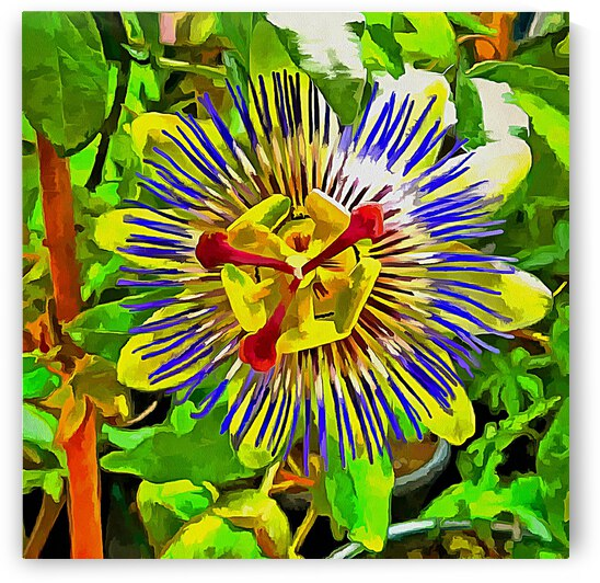 Passion Flower Pop Art by Dorothy Berry-Lound