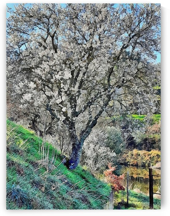 Early Signs of Spring by Dorothy Berry-Lound